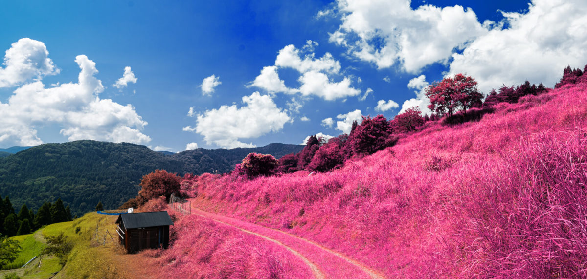 Photoshopで植物の色を変えて異世界っぽい雰囲気に